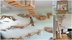 Amazing Overhead Playgrounds in Your Home for Your Cats! | Diply