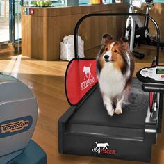 dogPACER Dog Mini Treadmill MiniPacer Folds Portable Small Med Dogs 1-55 lbs NEW in Sporting Goods, Fitness, Running & Yoga, Cardio Equipment | eBay