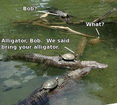 funny-meme-turtle-alligator