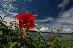 La flor de Panama