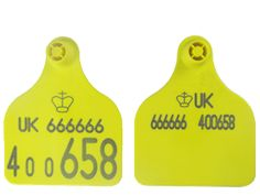 Shearwell Double Large Management Tags