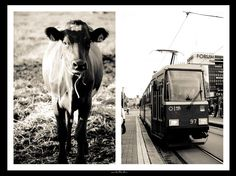 http://www.melancholic.photos/countrylife-vs-citylife-joint-exhibition-with-veera-amnelin/