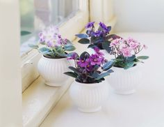 Nice 8 Charming Small Indoor Plants Ideas To Make Your Home Fresh An indoor plant is a concept of a plant in the house. Like the front garden or back of the house, the indoor garden works as an air circulation system. Small Indoor Plants, Indoor Flowering Plants, Indoor Flowers, Blooming Plants, Tropical Plants, Potted Flowers, Red Flowers, Chinese Money Plant, Violet Plant