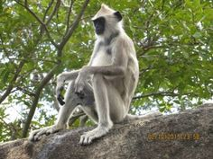 Protect Newly Discovered Monkey From Extinction - ForceChange