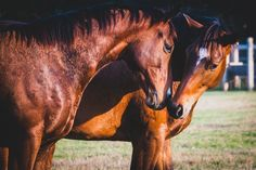 Extremely stunning brown horse pictures #horses#horse#horselovers#horselove#lovinghorses#beautifulhorsepictures#horseriding#stunninghorses#beautifulhorses#loveforhorses#stallions#polopony#pony#whitehorses#equestrian#marwarihorse#marwari#thoroughbred#ponies#horsepictures#horsephotography#horsebackriding#LAPOLO Polo Horse, Beautiful Horse Pictures, Pebble Beach Concours, Brown Horse, Horse Training, Horse Breeds, Horse Photography, Classic Elegance, Thoroughbred