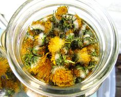 Dandelion flowers that I dried this summer to sell in my shop!