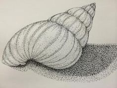 While the shell does not incorporate any strong high- or low-lights, the shadow is an excellent example of using stippling density to produce shading.