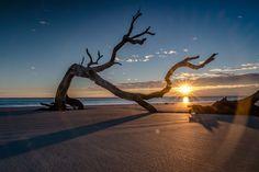 Explore Driftwood Beach on Jekyll Island, Georgia Beach Photography, Landscape Photography, Nature Photography, Driftwood Beach Jekyll Island, Jekyll Island Georgia, Emotional Photography, Silhouette Photography, Jolie Photo, Landscape Pictures
