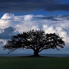 Trees are poems that the earth writes upon the sky-Gibran