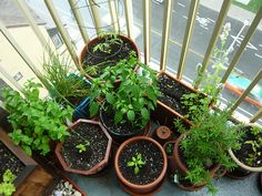 Container Vegetable Gardening is super fun! It helps you be more creative when planning your garden!