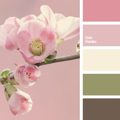 bright pink, brown, color of cherry, color of cherry blossoms, dark brown, green, khaki, light pink, olive-green, pale yellow, pastel pink, pink, pink cherry, shades of pink.