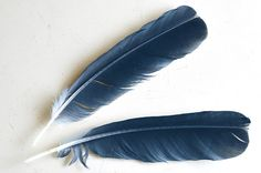 Had a crow drop a feather at my feet on my hike. A sign that I am not alone #lightworker #nature #spiritualsigns