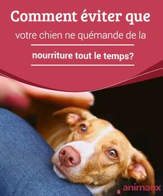 Pet paws - Come evitare che il cane chieda continuamente cibo Animals And Pets, Cute Animals, Education Canine, Puppy Training Tips, Dog Rooms, Wale, Pet Paws, Golden Retriever, Cute Creatures