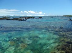 Kapoho tidepools... the best snorkeling i have ever done!  Dieing to return!