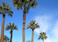 (My friend is a full-time RV gypsy. Here's her blog.) Jon and Cheryl's excellent adventure!: Yuma, Arizona: Summertime and the livin' ain't easy! Yuma Arizona, Best Places To Retire, Rv, Summertime, Gypsy, Adventure, Blog, Motorhome, Caravan Van