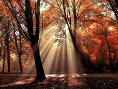Dressed to Shine by Lars Van De Goor. Autumnal scene where sun-rays lighten up a forest path. Taken early in the morning, air still moist. This forest is beloved by many people living in Amsterdam. It's a very relaxing and peaceful place. The sun-rays just added that little more to make this a spot I'll never forget. Amsterdam Forest, 2009