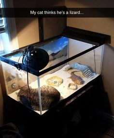 Funny Pictures Of The Day – 85 Pics