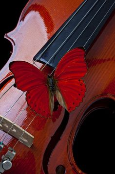 Butterflies and violins...two beauties in life...