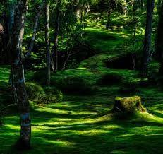 Inspirational Moss Gardens at temple Koinzan Sayhodzhi, located at the foot of Kyoto Koinzan.