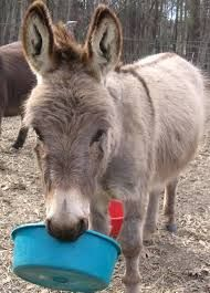 Image result for 2 person donkey costume pattern