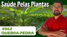 Saúde Pelas Plantas - Quebra pedra [Pedra nos rins, gordura no fígado, c...