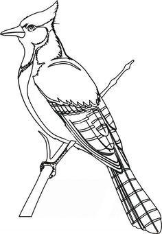 Blue Jay Bird Coloring Page Printable Bird Coloring Pages Blue Jay Bird Coloring Pages