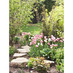 21 Spring Flowers for Your Garden ❤ liked on Polyvore featuring backgrounds, pictures, pics, garden, photos and filler