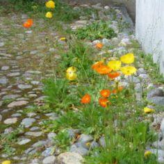 Piccoli giardini di montagna   Italian Botanical Trips Stepping Stones, Outdoor Decor, Plants, Trips, Viajes, Stair Risers, Flora, Traveling, Travel