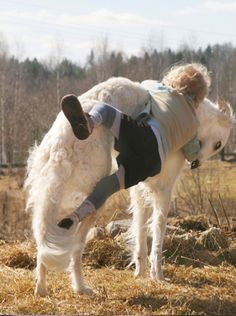 You do NOT ride a borzoi!!