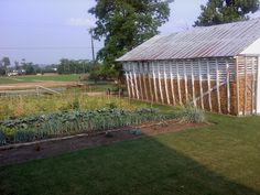 Ira & Annie Beiler farm - Vintage Road, Paradise, PA - Southern Lancaster County - June, 2011