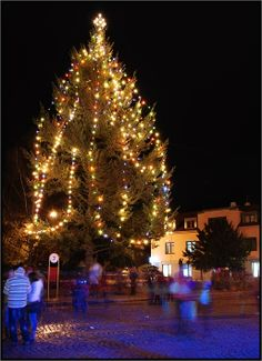 Christmas tree in Dobris, Czech Republic Christmas Markets, Christmas Tree, Eastern Europe, Czech Republic, Around The Worlds, Decorations, Lights, Holiday Decor, Teal Christmas Tree