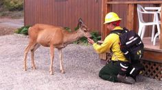 Firefighter turned 'deer whisperer' talks about unlikely friendship