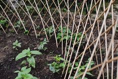 Expandable Willow Trellis by Gardeners Supply Co.