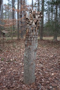 Trunk turned into sculpture Annmarie Gardens in January - Solomons, MD by MMcDowell