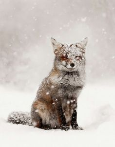 Fox, snow, and winter image nature animals, animals and pets, baby animals Animals And Pets, Baby Animals, Cute Animals, Wild Animals, Animals In Snow, Nature Animals, Nocturnal Animals, Baby Elephants, Beautiful Creatures