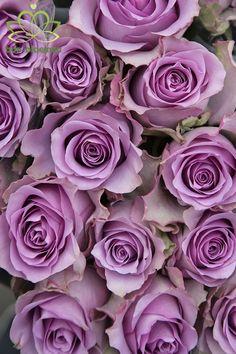 Purple Rose Tattoos, Rose Tattoos On Wrist, Rose Tattoos For Men, Purple Roses Wallpaper, Wallpaper Nature Flowers, Flower Wallpaper, Lavender Aesthetic, Aesthetic Dark, Rose Varieties