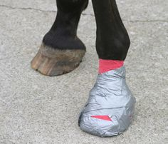 Treating a Hoof Abscess my mom uses this all the time and it has nevr let her down our horses are awesome