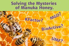 Decoding Manuka Honey Designations: What do the numbers mean? Manuka honey isn't ordinary honey. It's a superfood that is excellent for the digestive system, as it is naturally antimicrobial and contains enzymes that can help restore gut health. It cont… Wedderspoon Manuka Honey, Medicinal Honey, Types Of Honey, Honey Benefits, Artist Card, Health Facts, Health And Wellness, Gut Health, Superfood