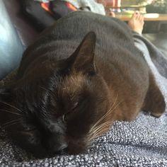 Moet needs to sleep off his flu on his human.