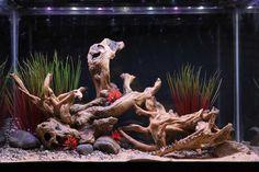 Themed Aquarium of the Month - Deadwood Gulch
