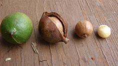 Защо наричат макадамията царица на ядките? http://www.zdravnitza.com/a/nav/news/s/s/news_id/6592