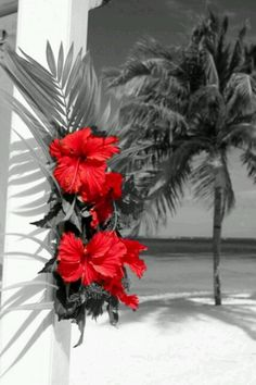 White sandy beach, coconut palms growing to the ocean, red hibiscus in the garden . A real tropical state of mind in paradise . Hibiscus Flowers, Tropical Flowers, Beach Flowers, Hawaiian Flowers, Blue Flowers, Hibiscus Garden, Lilies Flowers, Tropical Fabric, Cactus Flower