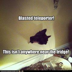 Unstable Experimental Technology Ruins Basement Cat's Evil Plans Yet Again