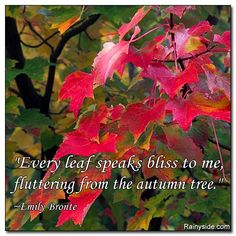 """Every leaf speaks  bliss to me, fluttering from the autumn tree.""   ~Emily Bronte"
