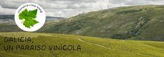compra-vino.com Blog: Galicia, un paraíso vinícola