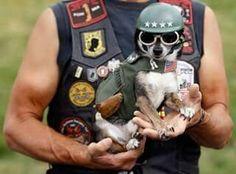 Chihuahua bad boy