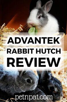 Advantek Rabbit Hutch Review – Advantek The Stilt House Rabbit Hutch #pets #rabbit #bunny #animals #rabbitrun #rabbithutch