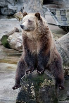 beautiful bear looking bored