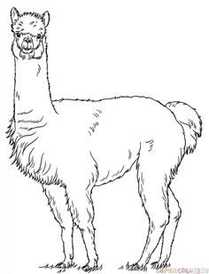 """Llama Coloring Pages Printable. Llama (read: Yama) is a social animal that lives in groups and is an endemic animal in South America. The name """"llama"""" comes from the Peruvian languag. Drawing Tutorials For Kids, Drawing For Beginners, Drawing For Kids, Art Tutorials, Animal Coloring Pages, Colouring Pages, Coloring Pages To Print, Alpacas, Chef D Oeuvre"""
