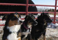 Good Shepherd Farm - Welcome to good shepherd Farm!